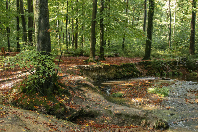 Teutoburg Forest in the Silberbach Valley in Horn-Bad Meinberg, North Rhine-Westphalia, Germany