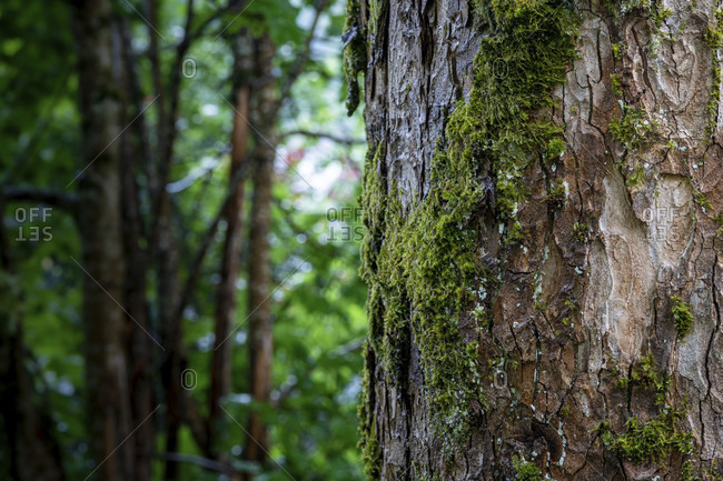 Maple, Trees, Park, Relax, Tree Trunk, Acer, Europe, Germany, Black Forest, Triberg, Bahnhof,