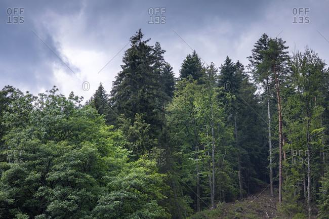 Forest, Nature, Green, Trees, Highlands, Europe, Germany, Black Forest, Triberg, Bahnhof,