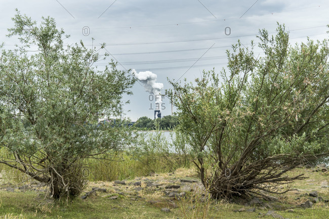 Rhine bank with willows, view of the KBS coking plant Schwelgern, extinguishing process