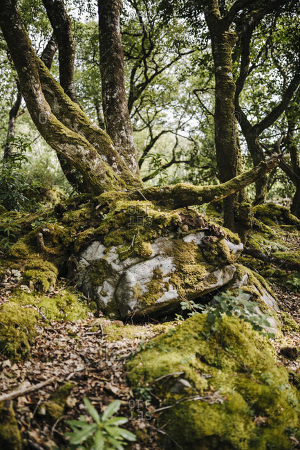 Rock overgrown with moss and trees in the forest of Glenveagh National Park, Ireland