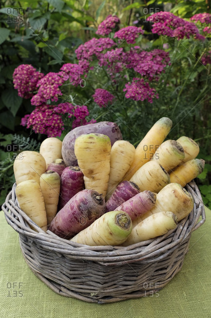Root vegetables (parsnips, colored carrots, parsley root, beetroot) in a basket