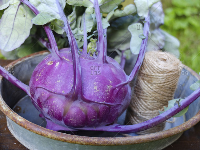 "Purple kohlrabi ""hummingbird"" (Brassica oleracea var. Gongylodes) in a bowl"