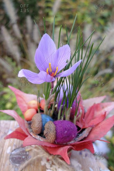 Autumn timeless (Colchicum autumnale) in a pot as an autumn decoration