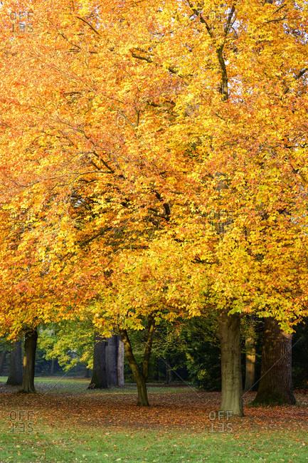 Germany, Baden-Wuerttemberg, Karlsruhe, tree in the castle garden.