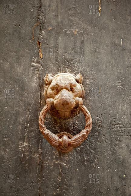 Door knocker, animal head, Lucca, Tuscany, Italy