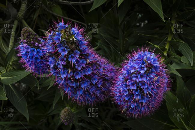 Plant Webbs Adderhead, New Zealand camper trip