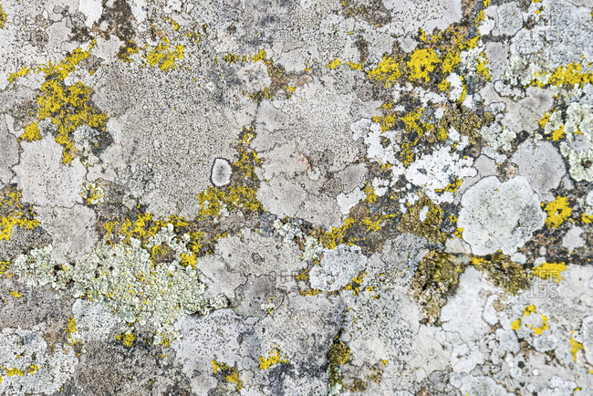 Mosses and lichens on stone, Smaland, Sweden