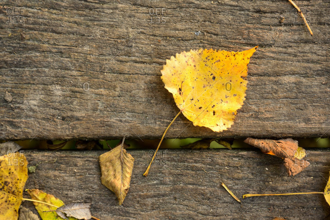 Autumn mood with leaves on a wooden planks.