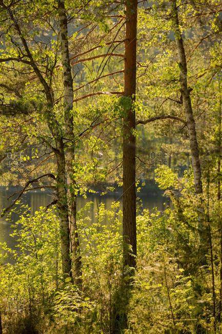 Tree Landscape, Summer Scenery, Finland