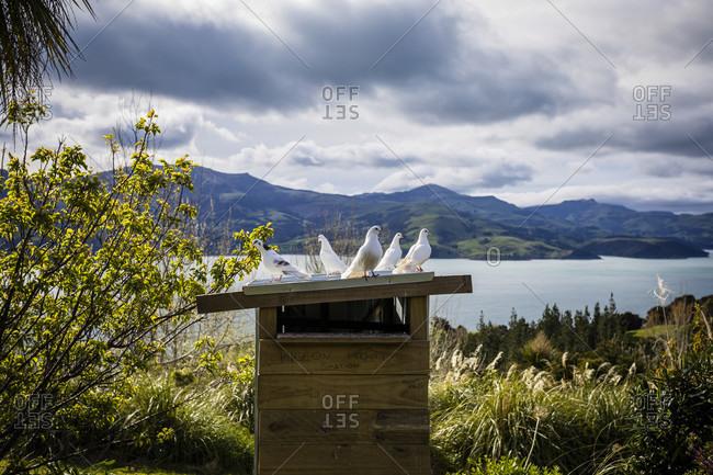 Dovecote with white doves in Akaroa