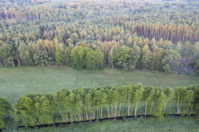 Row of trees from a bird's eye view