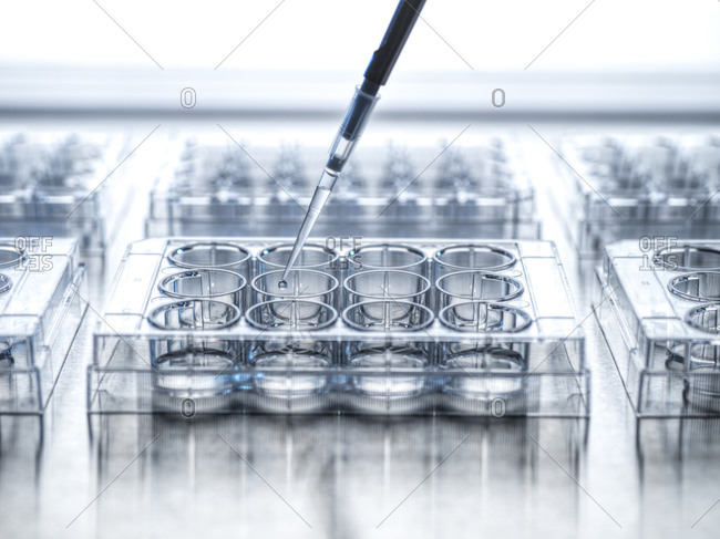 Medical sample beingpipetted into microplate