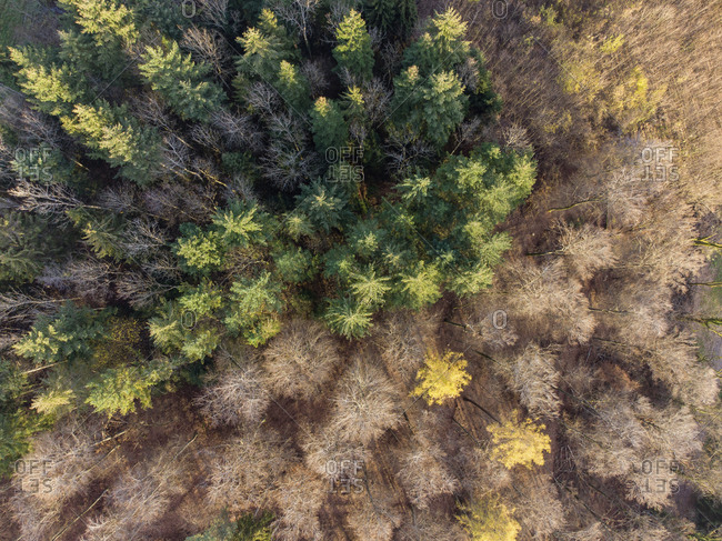 Aerial view of mixed forest in autumn