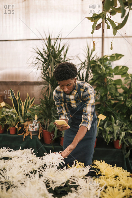 Young male florist photographing white flowers in plant nursery