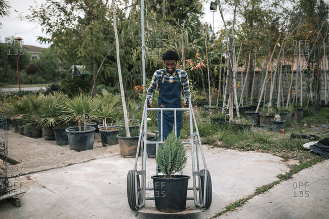 Happy young male farm worker pushing cart with potted pine tree at garden center