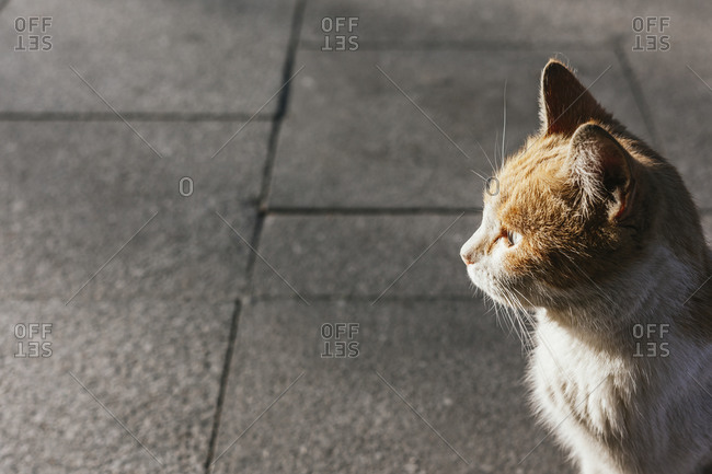 Portrait of brown and white cat standing on pavement