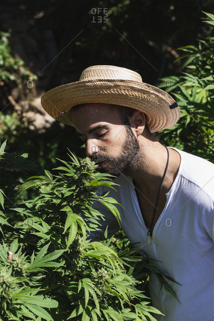 Young male farmer smelling marijuana plant on sunny day