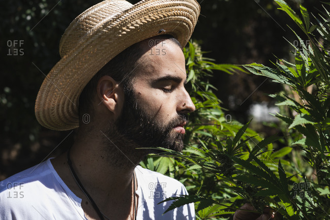Young male farmer smelling marijuana plant in farm on sunny day