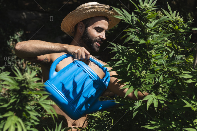 Smiling young farmer watering hemp plants on sunny day