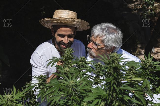 Smiling farmer and doctor examining hemp plants in farm