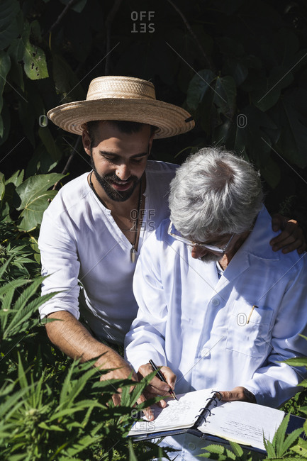 Male farmer and scientist discussing on hemp plants in farm