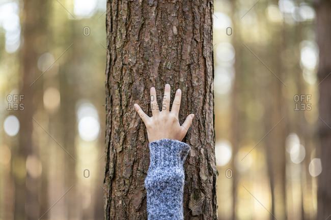 Female hiker's hand touching tree in Cannock Chase woodland during winter