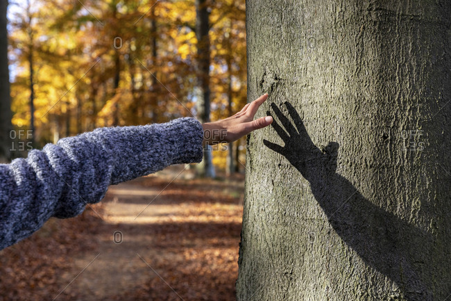 Woman hand reaching to touch tree in Cannock Chase forest