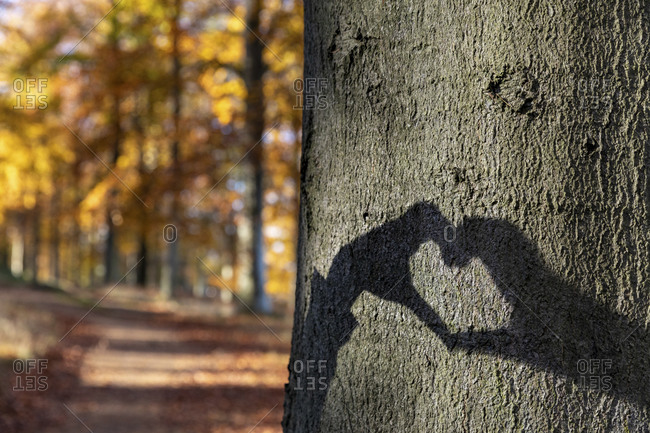 Heart shaped shadow on tree trunk in Cannock Chase woodland
