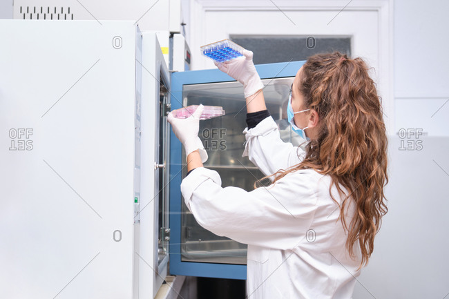 Young female scientist wearing face mask taking out culture plates from laboratory oven. Laboratory research concept.