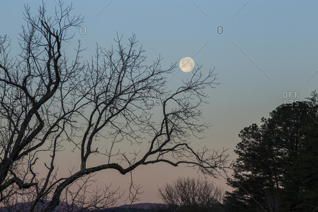 Full moon rising above silhouetted tree limbs in Cades Cove within the Great Smoky Mountains National Park
