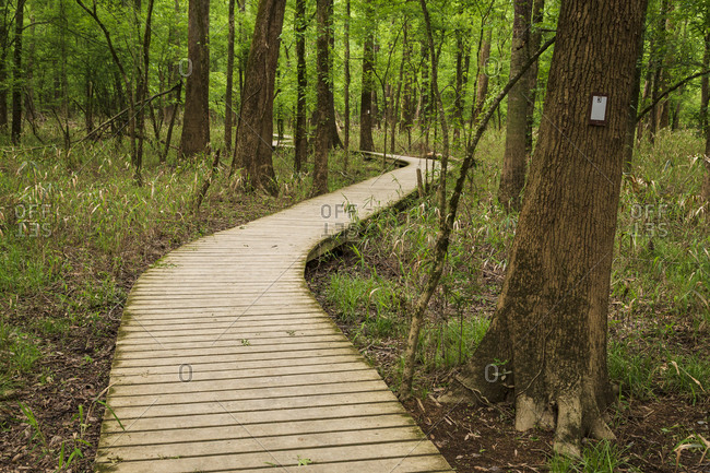 The Boardwalk Trail starting point for the vast majority of hikes within Congaree National Park and offers sights of the bottomland forest