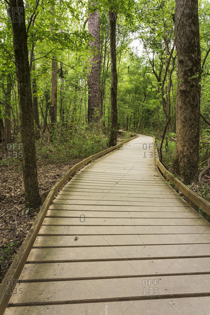 The Boardwalk Trail starting point for the vast majority of hikes within Congaree National Park in South Carolina