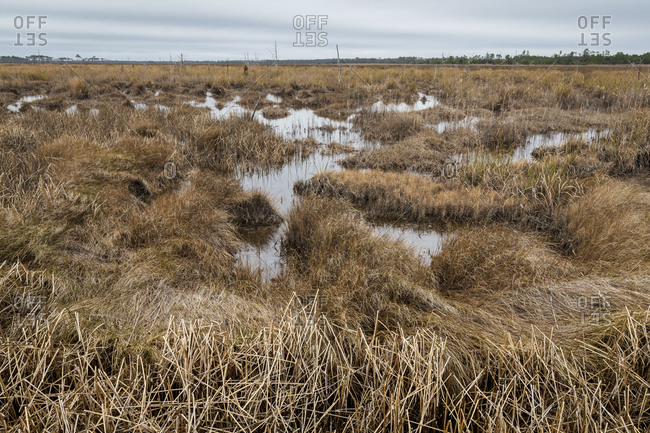 Swampy lands at Swanquarter National Wildlife Refuge appear desolate