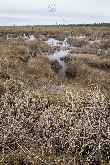 Desolate swampy lands at Swanquarter National Wildlife Refuge in North Carolina
