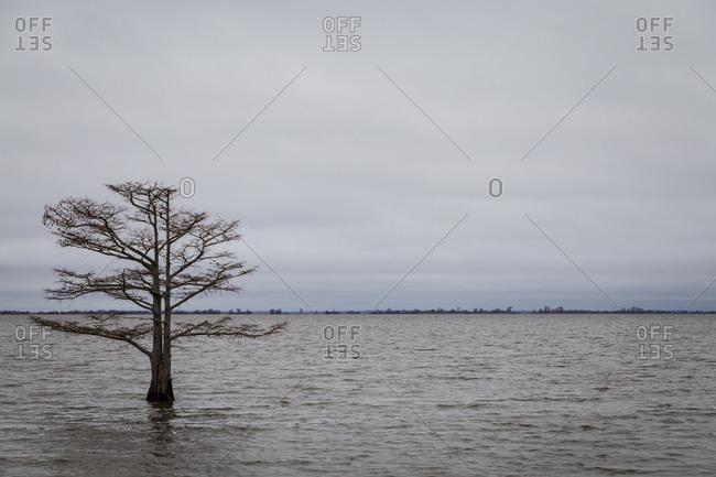 Lone Cypress tree within the Lake at Mattamuskeet National Wildlife Refuge in North Carolina