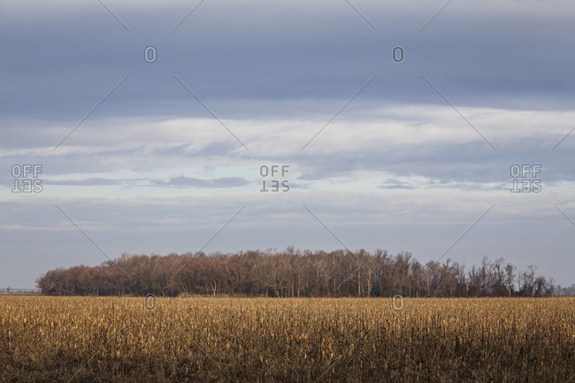 Landscape of Pungo Lake National Wildlife Refuge, North Carolina