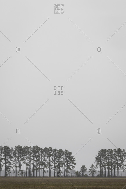 Rural field lined with tall trees surrounded by fog in North Carolina