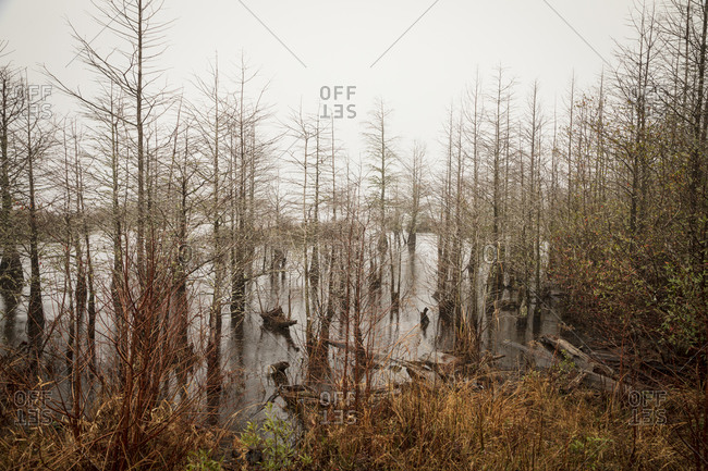 Swampland in Pocosin Lakes National Wildlife Refuge, North Carolina