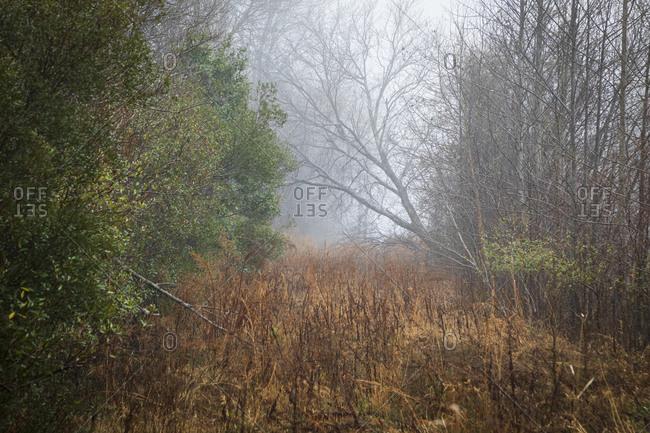 Foggy forest in Pocosin Lakes National Wildlife Refuge, North Carolina