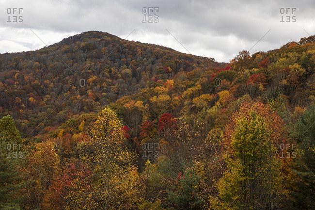 Beautiful fall colored forest covering mountains in Great Smoky Mountains National Park, Cataloochee, North Carolina
