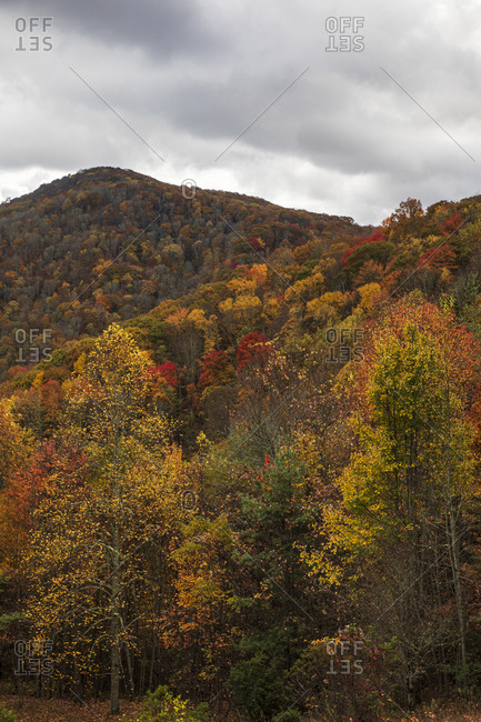 Autumn colored forest covering mountains in Great Smoky Mountains National Park, Cataloochee, North Carolina