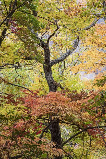 Beautiful fall foliage in Great Smoky Mountains National Park, Cataloochee, North Carolina