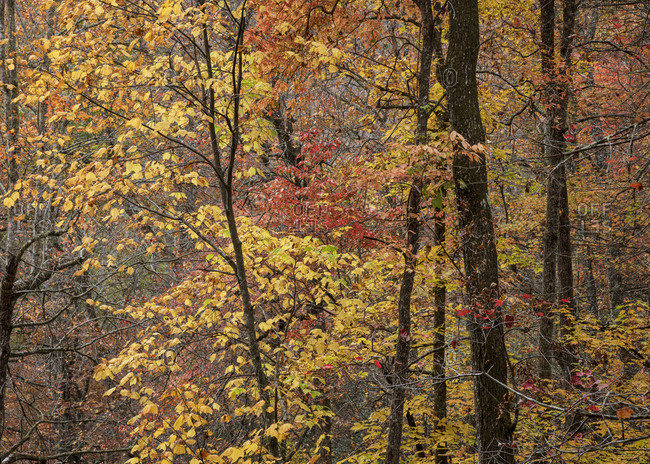 Colorful fall foliage in Great Smoky Mountains National Park, Cataloochee, North Carolina