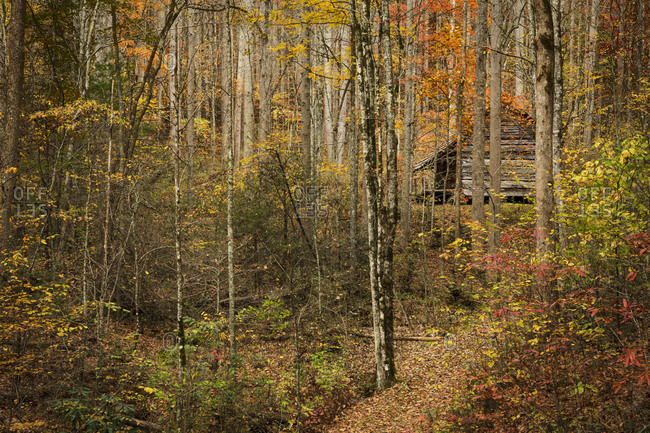 Abandoned cabin surrounded by colorful autumn foliage in Great Smoky Mountains National Park, Cataloochee, North Carolina
