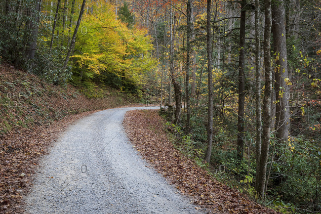 Gravel road winding through the Great Smoky Mountains National Park, Cataloochee, North Carolina