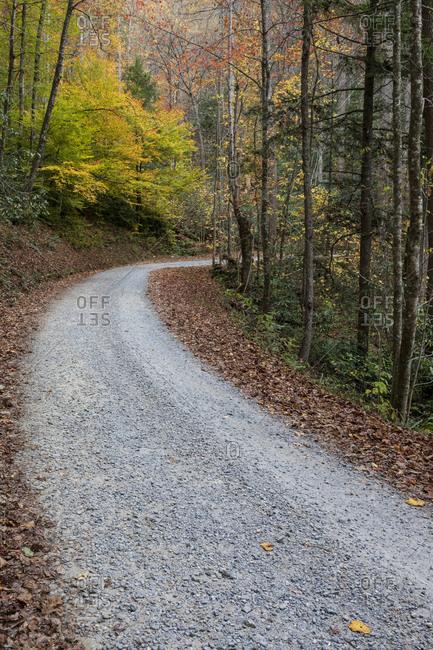Stone path winding through the Great Smoky Mountains National Park, Cataloochee, North Carolina