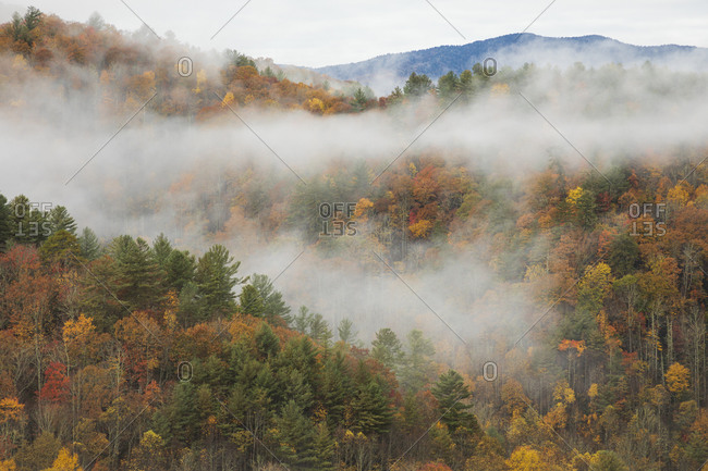 Colorful autumn forest covered in fog covering in the Great Smoky Mountains National Park, Cataloochee, North Carolina