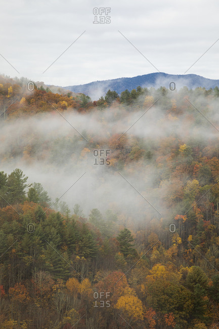 Fog covering mountains with colorful autumn foliage in the Great Smoky Mountains National Park, Cataloochee, North Carolina