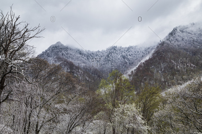 Snow covered mountains in Great Smoky Mountains National Park in Tennessee
